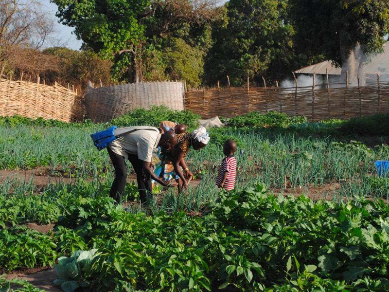 Persone che raccolgono nel campo nel progetto a Kuida